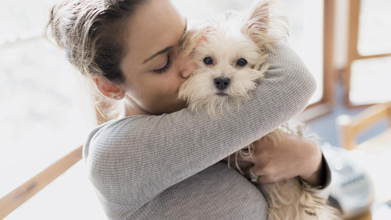 Why You Might Want To Get Dog Daycare Services?